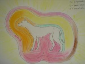 Aurabild Hund, Aurareading, Energiearbeit, energetisches Abbild