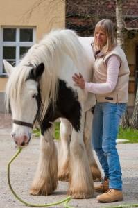 Craniosacrale Therapie fuer Pferde, Kraniosakrale Therapie, Cranio Pferd,