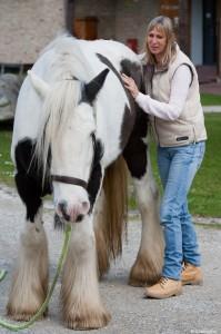 Craniosacrale Therapie für Pferde